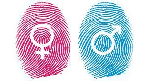 «Гендер» і «стать»